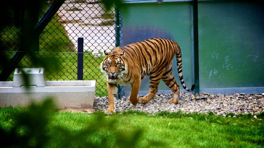 'Indian zoos put on 'highest alertness' after Bronx zoo tiger tests positive of COVID-19'